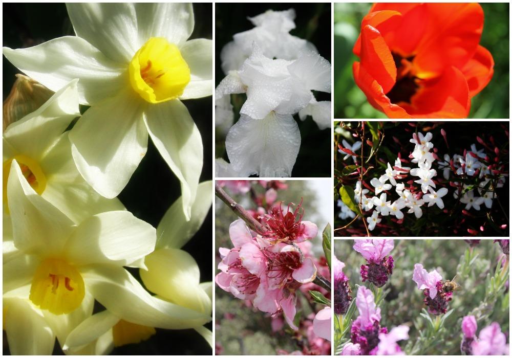 GardenSpringCollage