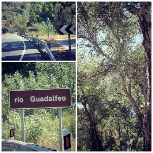 Guadalfeo4__500