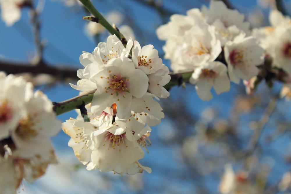 blossomoverbene_1000